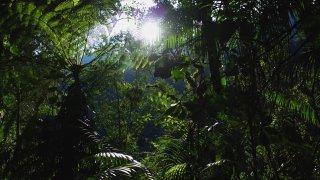 Dans la jungle en direction de la ciudad perdida