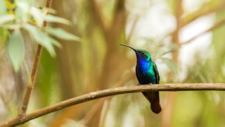 Endemic birds in Colombia