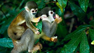 Colombia's Plant and Wildlife