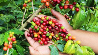 Colombia throught its coffee & gastronomy