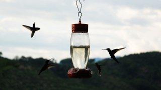 Colibris dans la région du café en Colombie