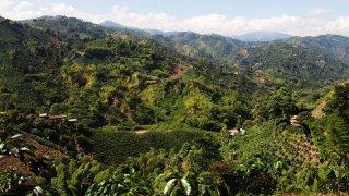 La région de l'Eje Cafetero en Colombie