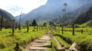 Dans la Vallée de Cocora en Colombie