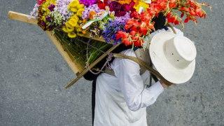 La fête des fleurs à Medellin en Colombie