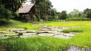 Une maison en Amazonie
