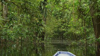 In the Amazon near Puerto Nariño